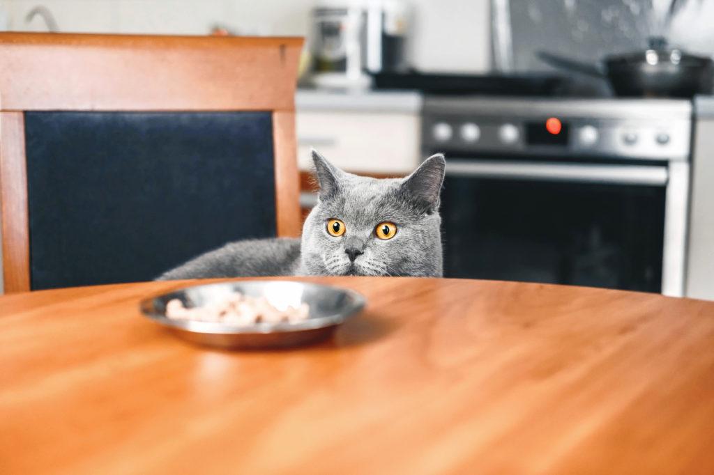 futterumstellung bei katzen
