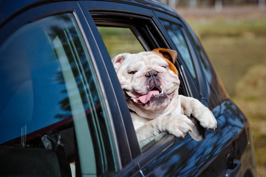 mit hund reisen