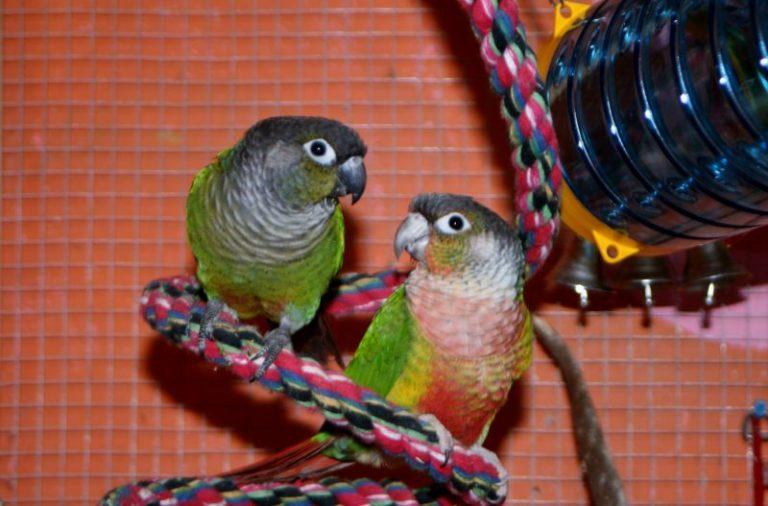 fugler med leker