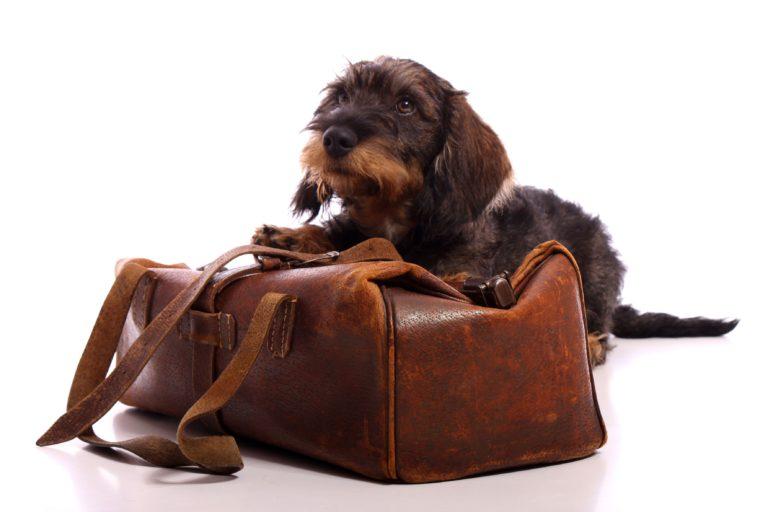 hund med koffert