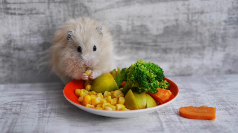 hamster spiser grønnsaker