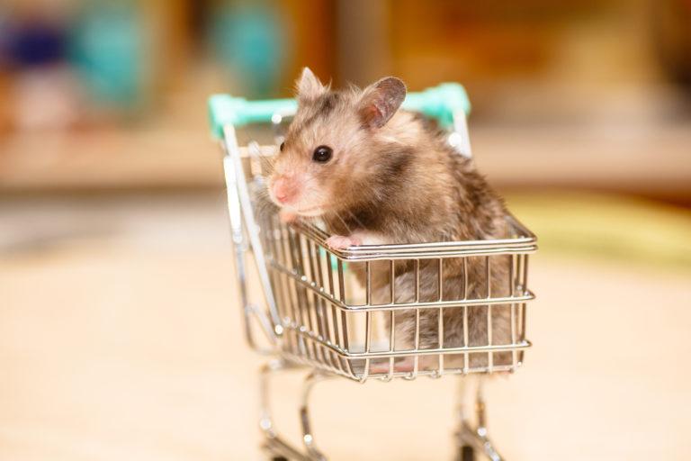 grått hamster i liten handlevogn