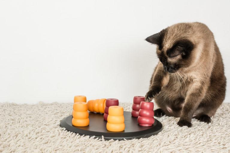 katt med intelligensleke
