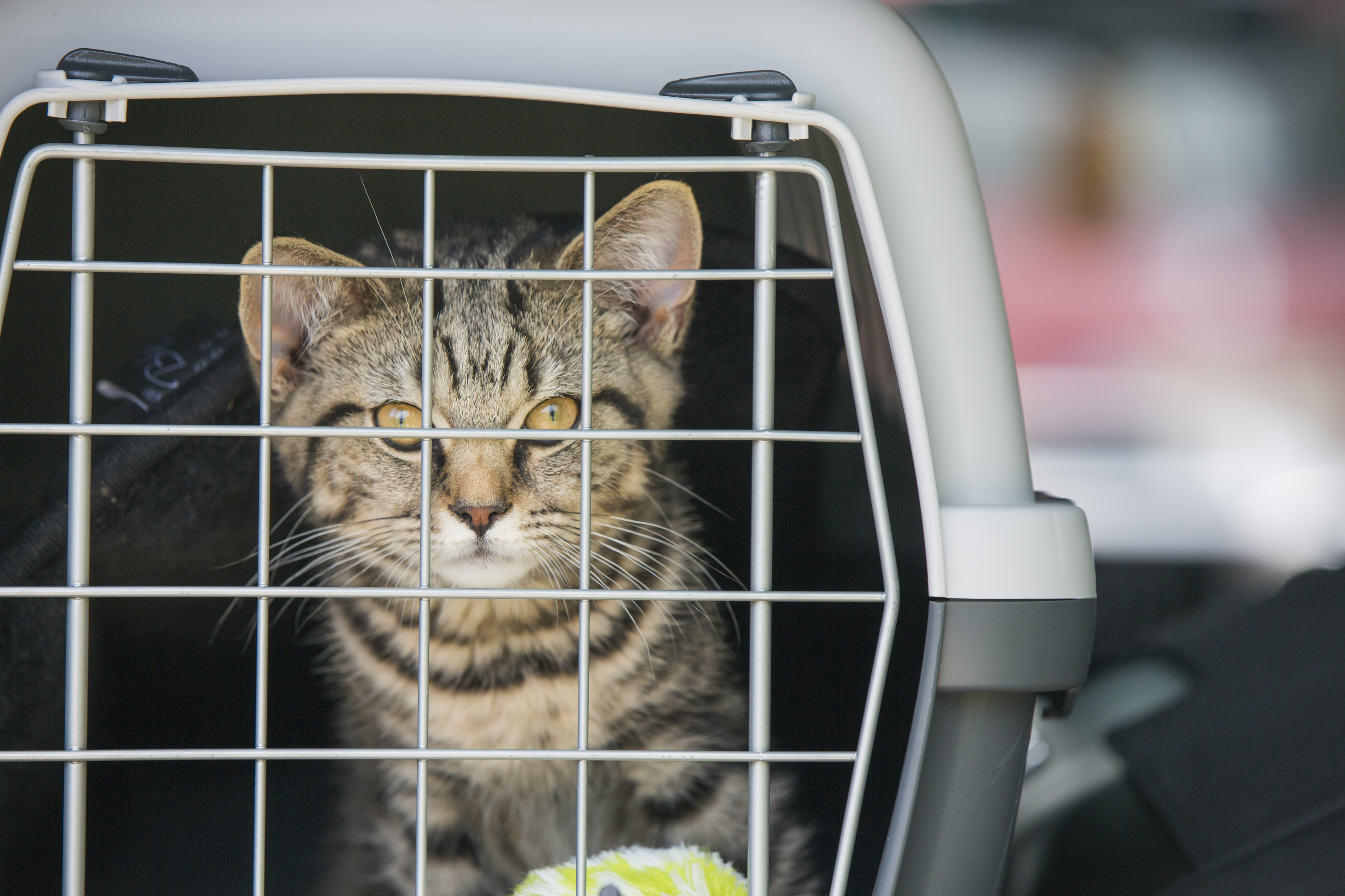 Trygg reising med katt