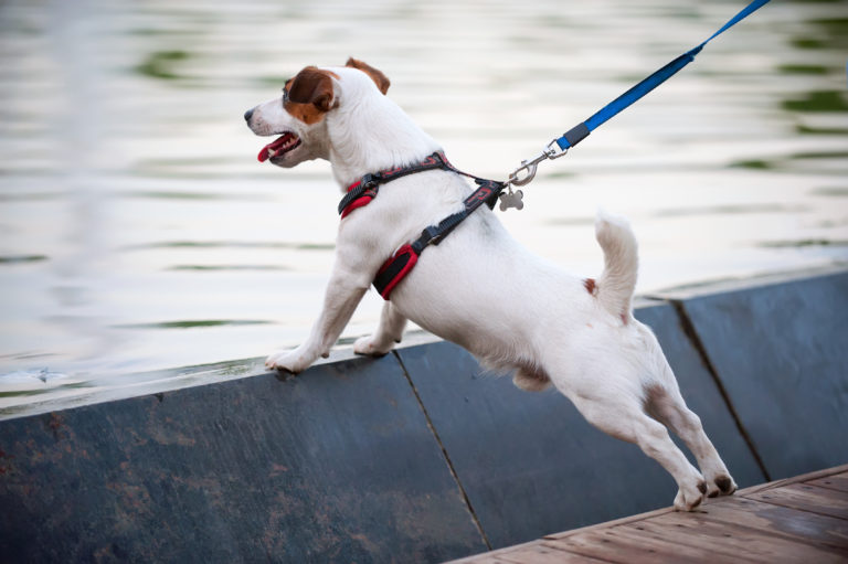 Hund med hundesele