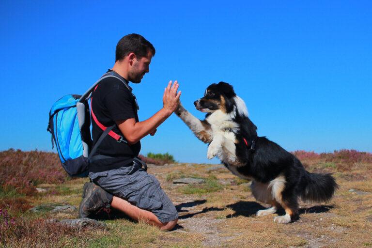 high five menneske hund
