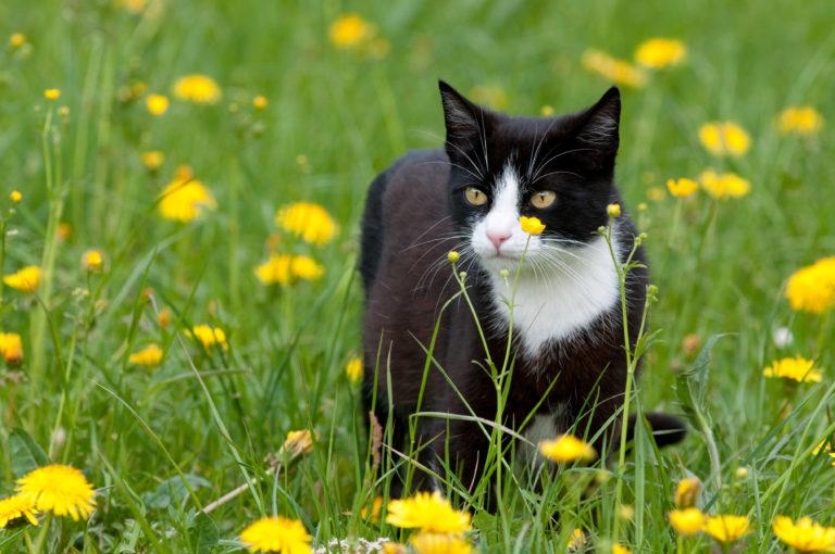 katt i en blomstereng