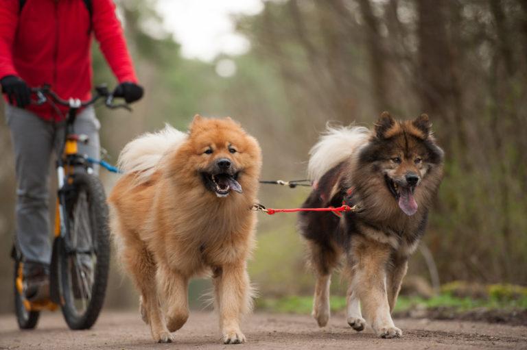 hunder som løper ved siden av sykkel