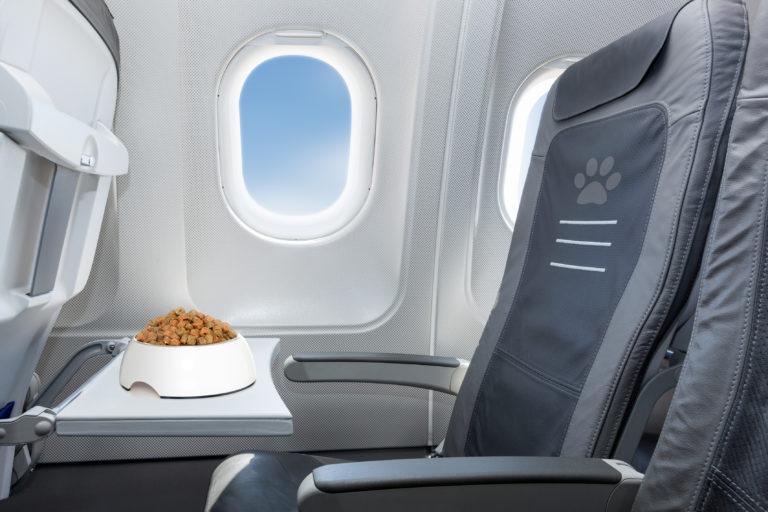 hundeskål på fly