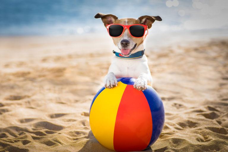 hund på stranden med badeball