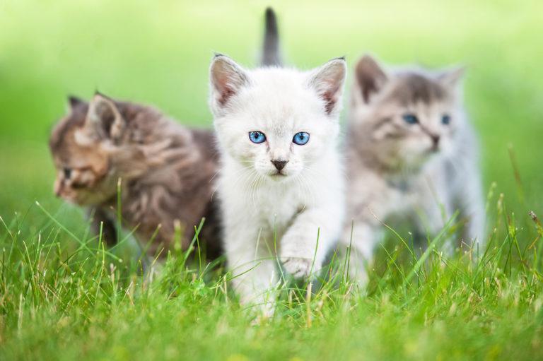 Tre små kattunger i gresset