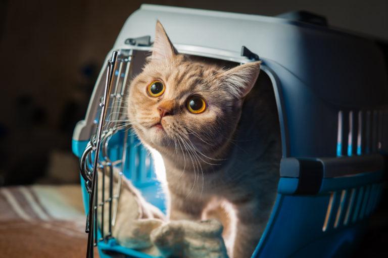 Katt i transportburet sitt