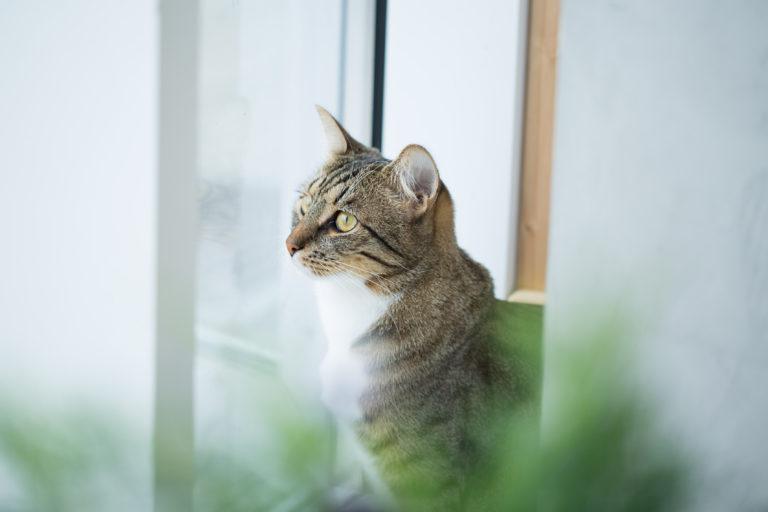 Ung katt mellom blomster