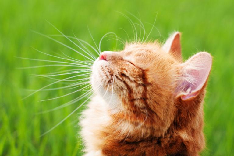 Katt ute i solen