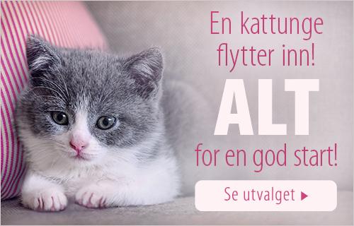 no_kitten