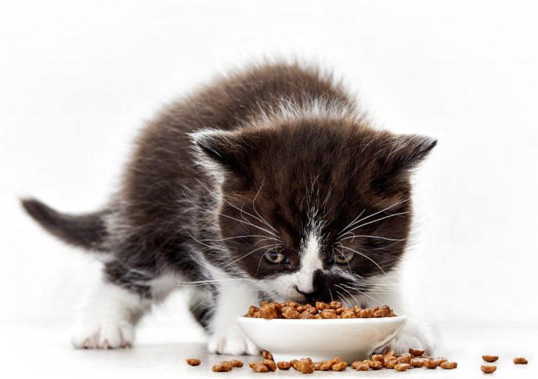 Kattunge som spiser kattemat