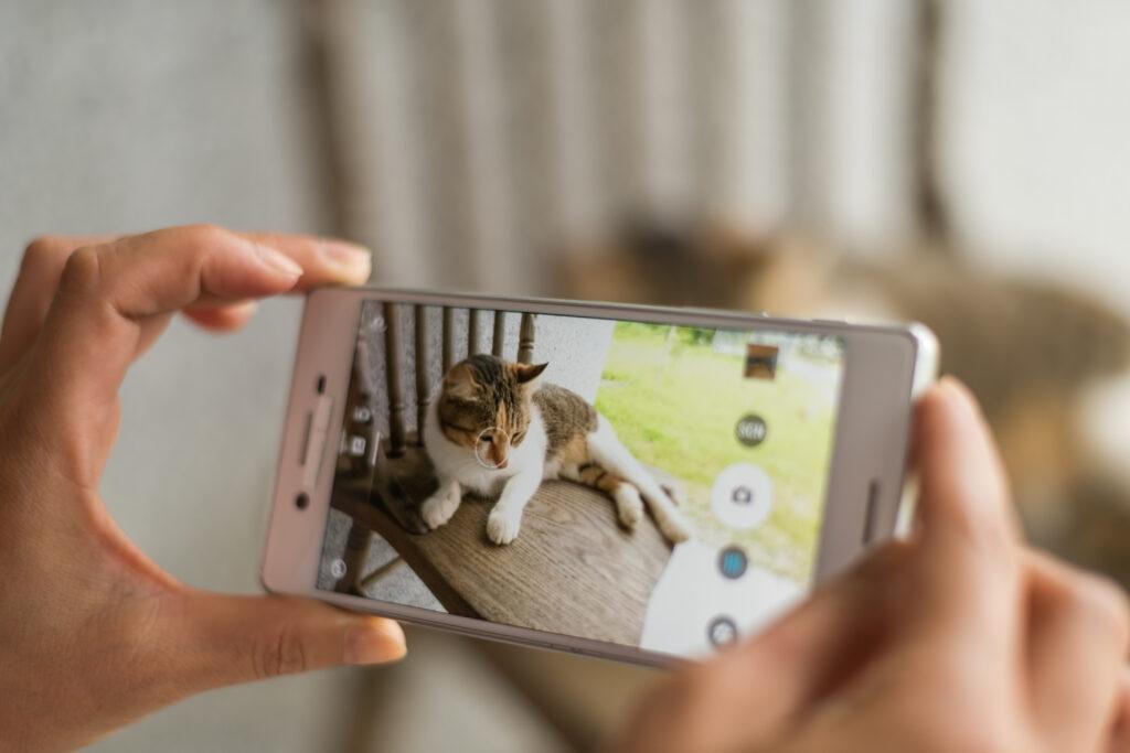 Kattebilder med mobiltelefon