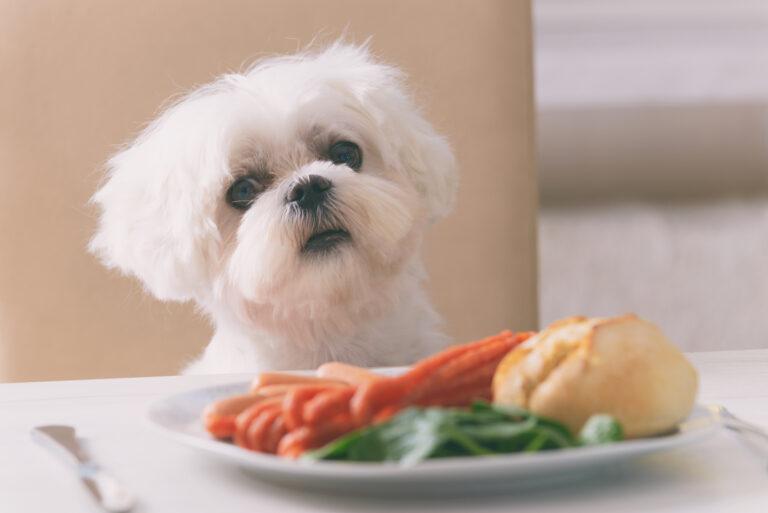 Farlige matvarer for hunder