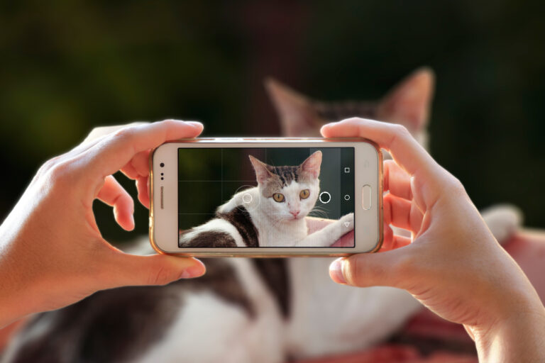 Kattebilder