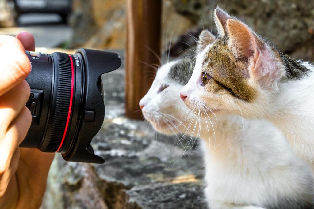 Kattebilde av to katter