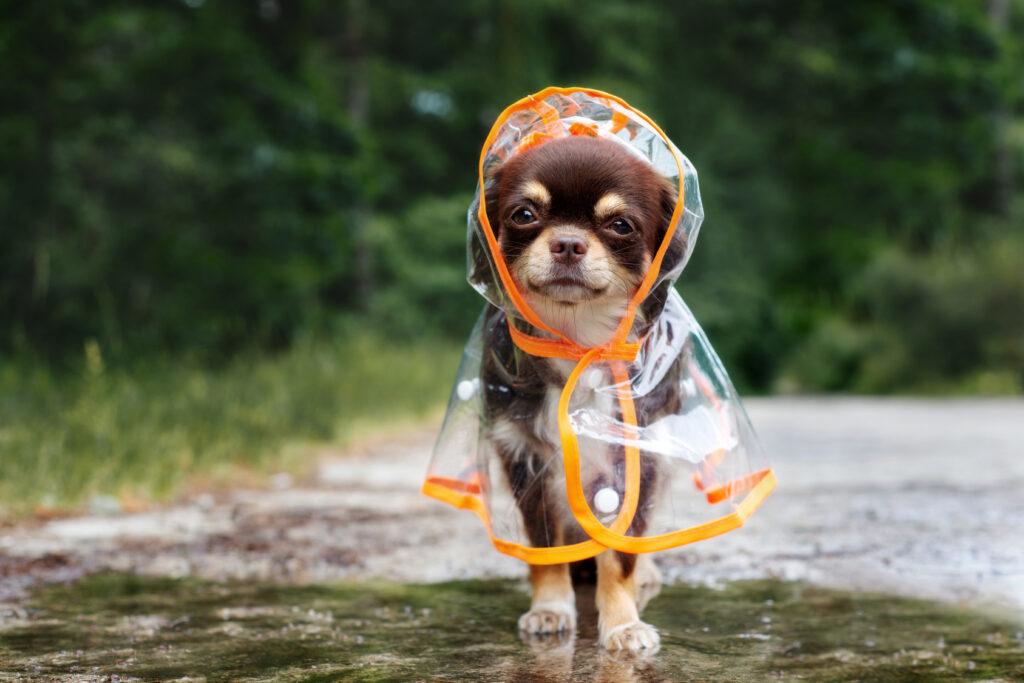 Hund med regnfrakk