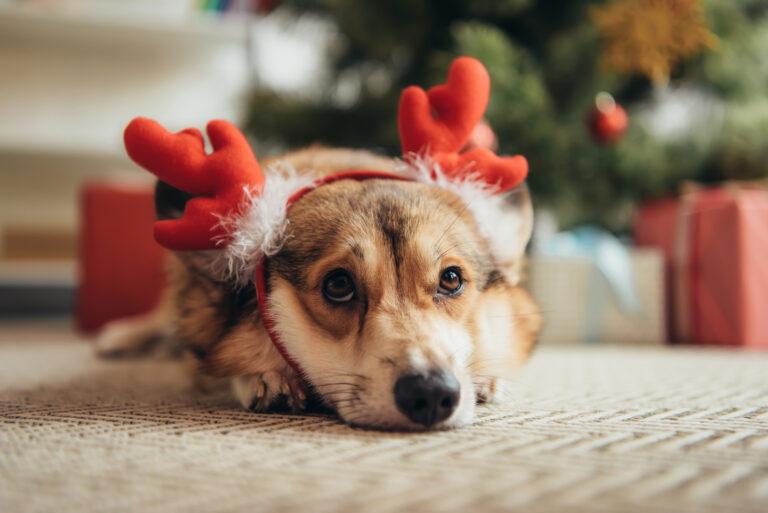 Hund under juletreet