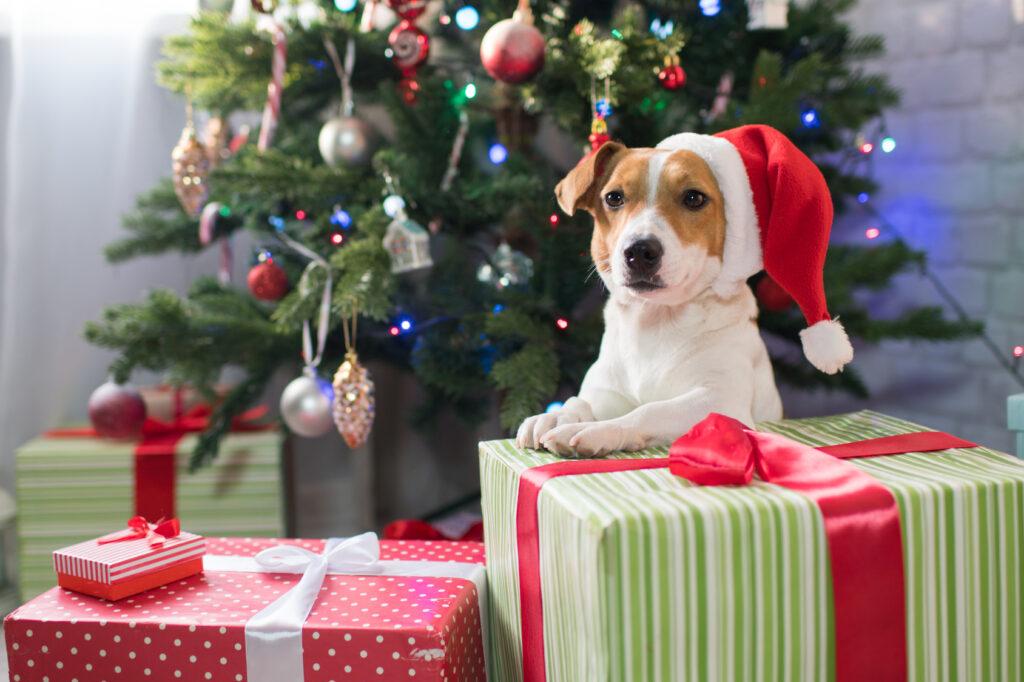 Hund med nisselue og julegaver