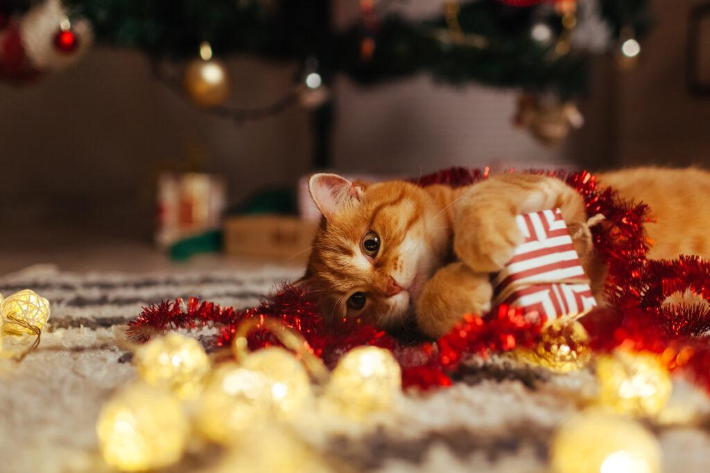 Katt som leker med julegave