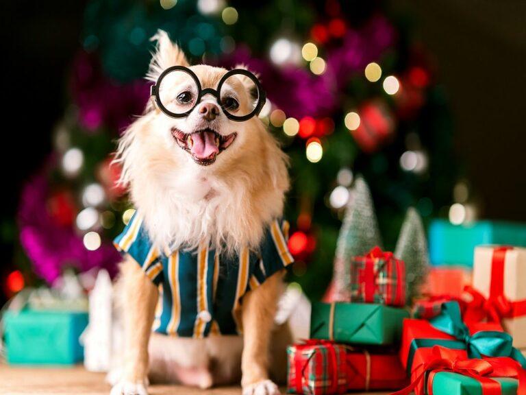 Julegaver til hund