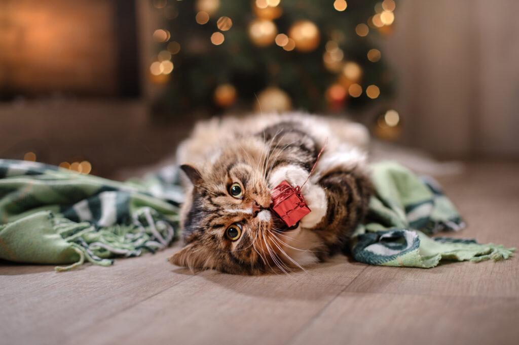 katt med julegave