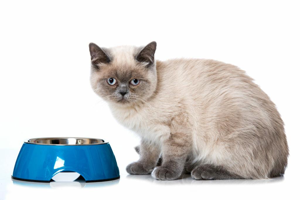 Fôrintoleranser hos katter