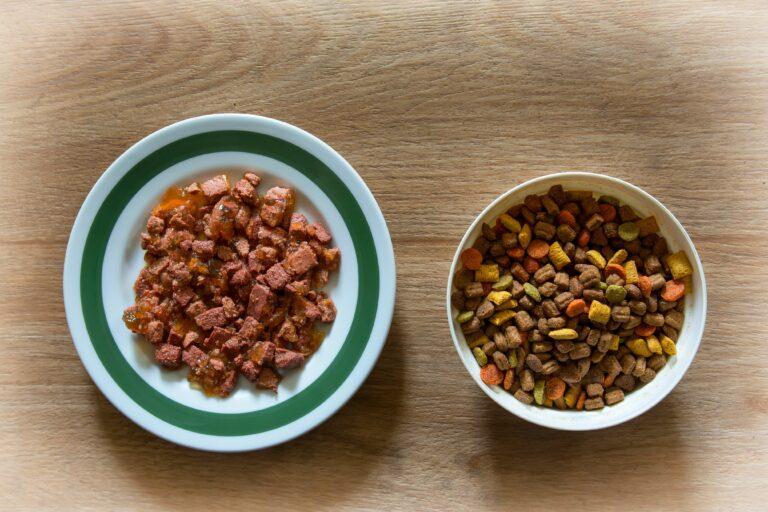 Tørrfôr eller våtfôr til katt