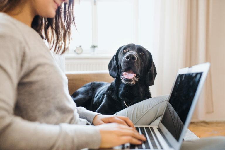 hjemmekontor med hund