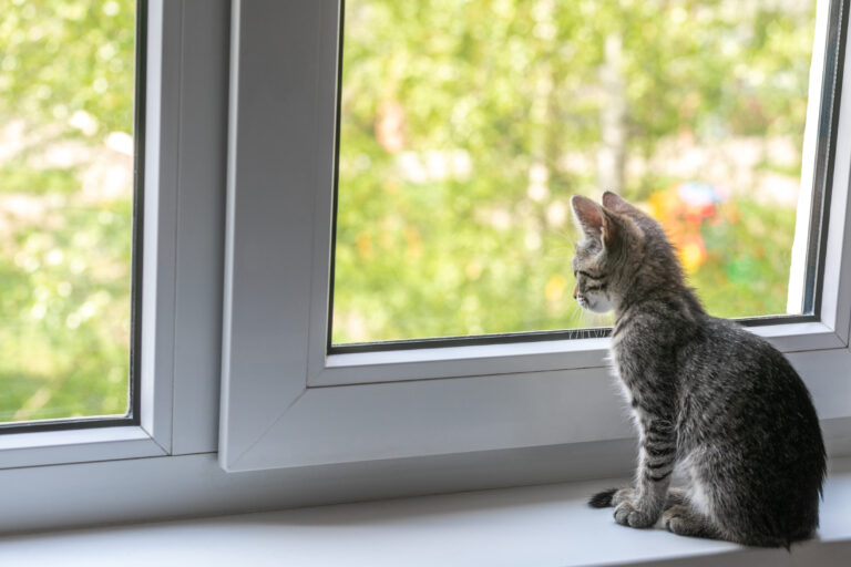 kattens coronavirus