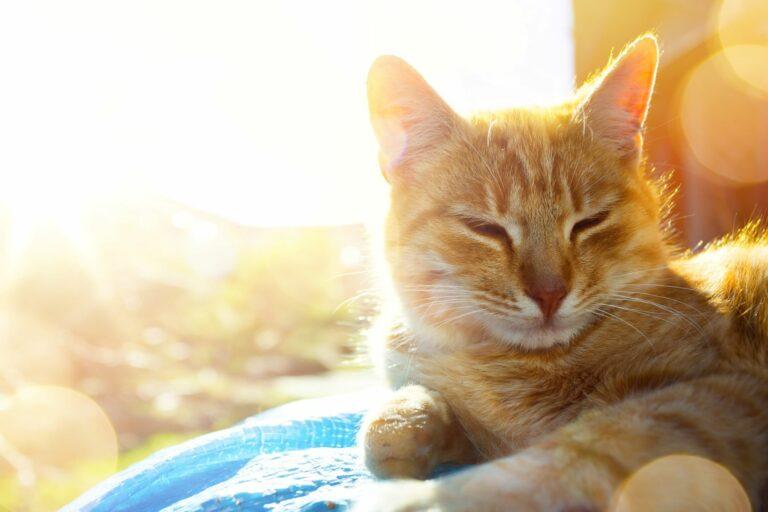 Katt i varmen fra solen