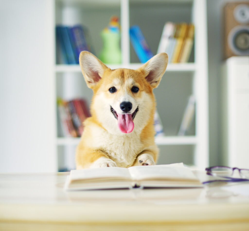 Hund bak åpen bok