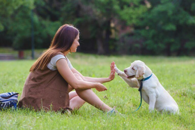Søt hund gir kvinne en high five