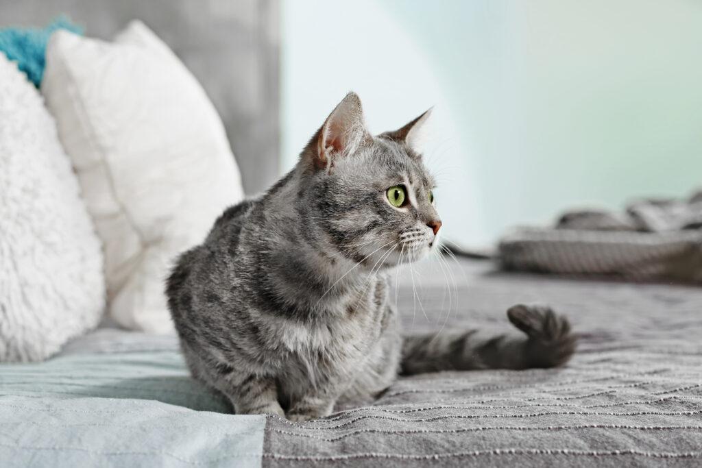 Utfordring med at katten tisser i sengen