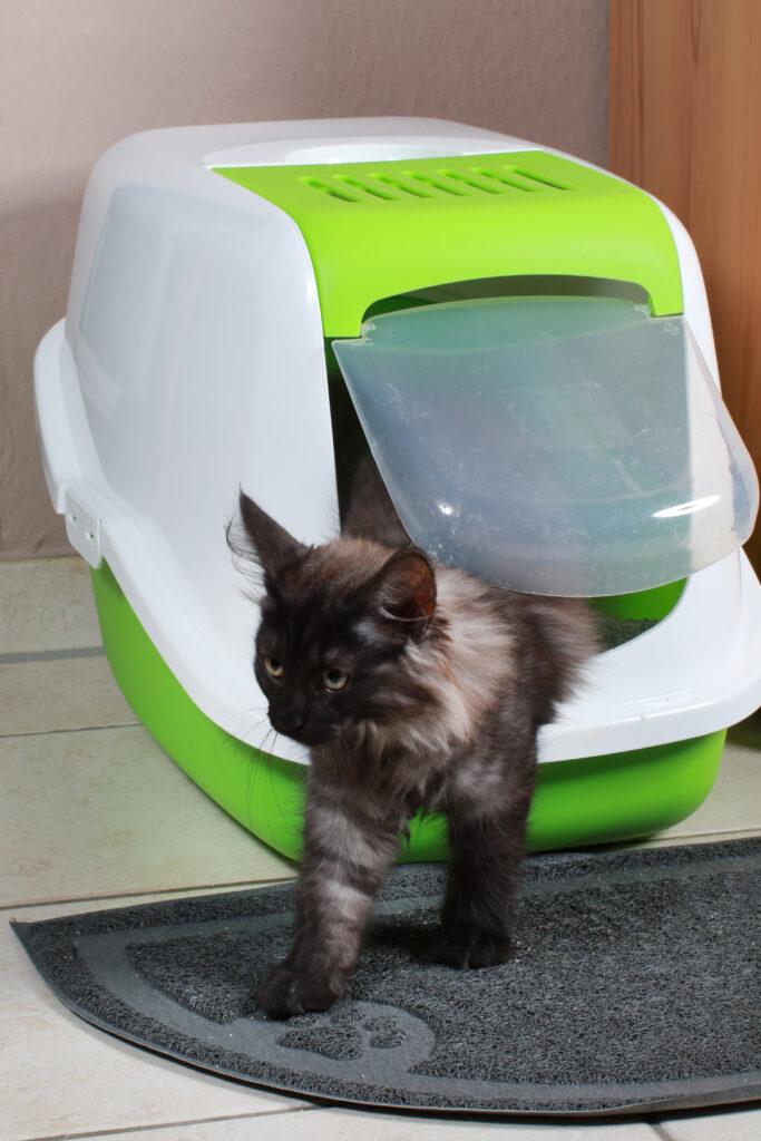 Kattetoalett med eller uten tak?