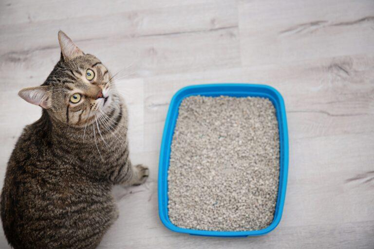 Ulike typer kattesand