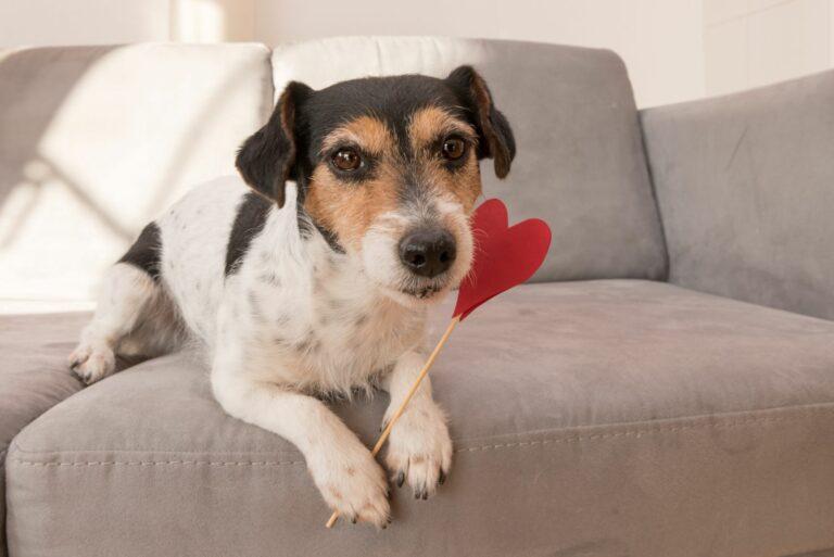 Valentinsdag med hund