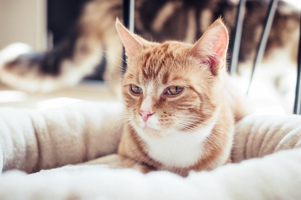 Valentinsdag med katten