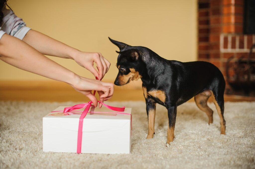 Valentinsgave til hund