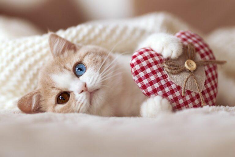 Valentinsdag med katt
