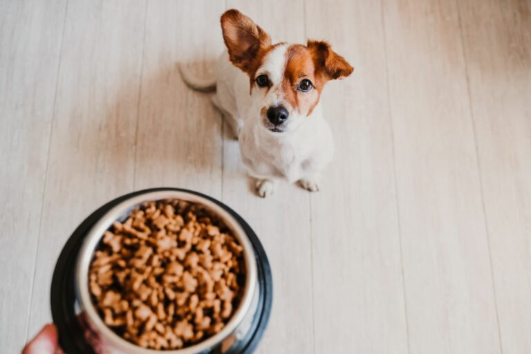 Beregne riktig fôrmengde til hund