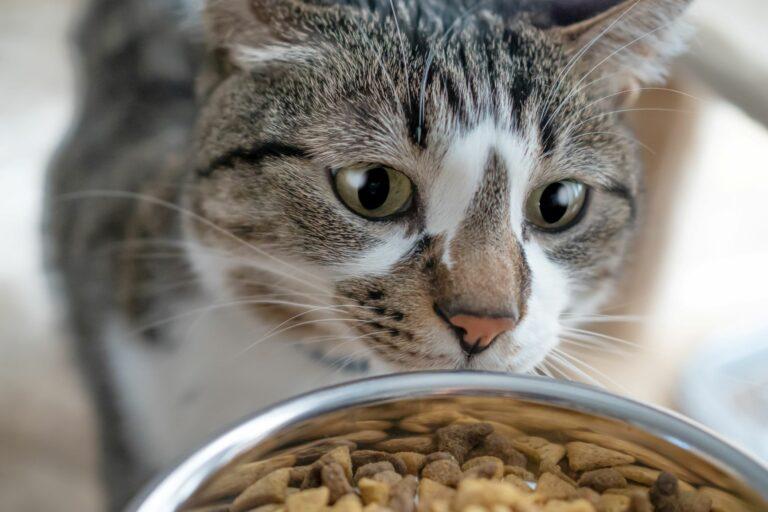 Fôrmengde til katt