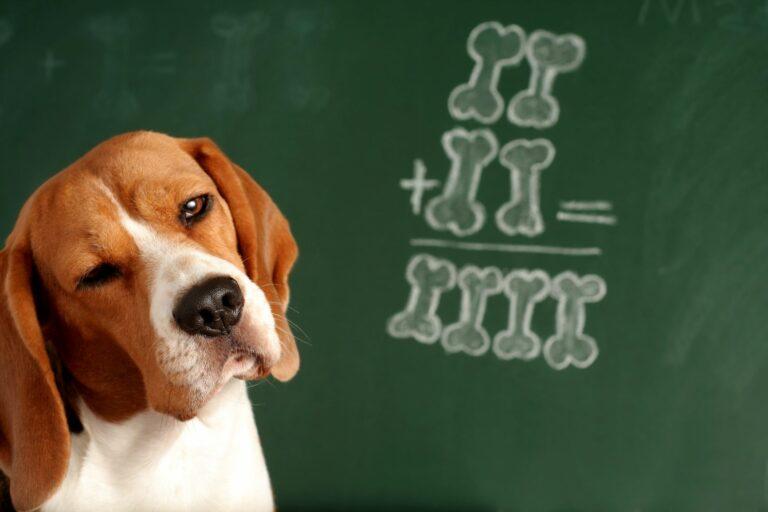 Oppfatter hunder alt vi sier?