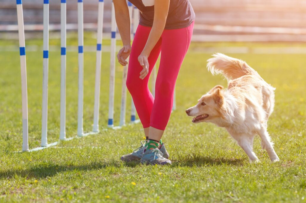 Kommunikasjon mellom hund og eier