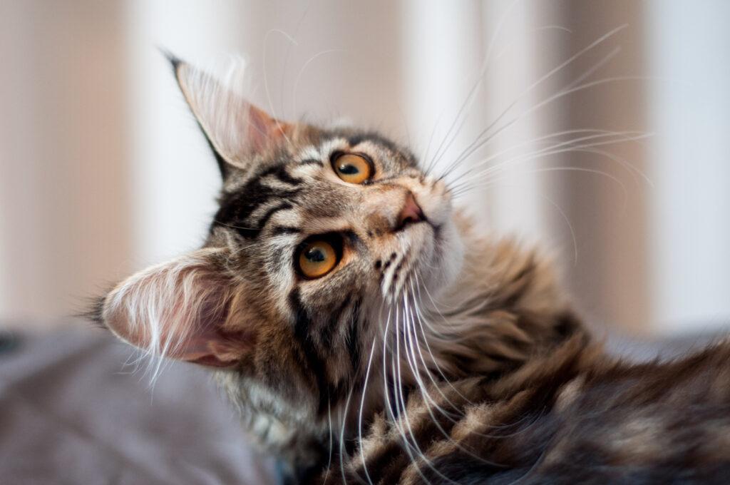 Ting å tenke på før du skaffer deg en katt