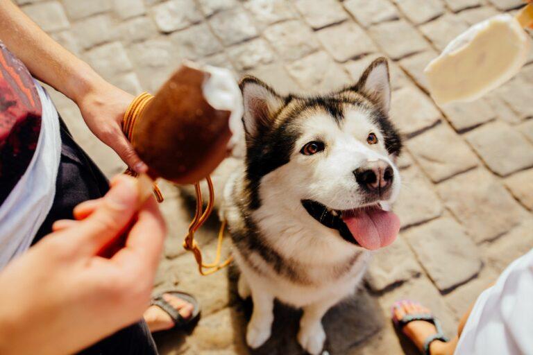 Hund som ser på iskrem